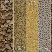 La cultura del cereal sin glutén con Proceli